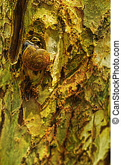 Group of snails crawling on a tree