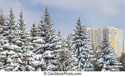 Group of snow covered spruces against the apartment building