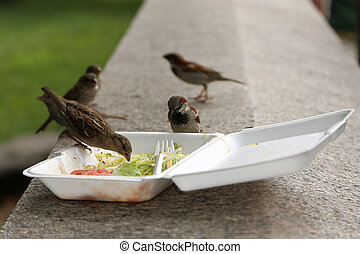 Group of sparrow birds eats from dirty plastic lunch box with leftovers after lunch
