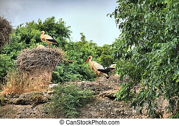 Group of storks on a tree