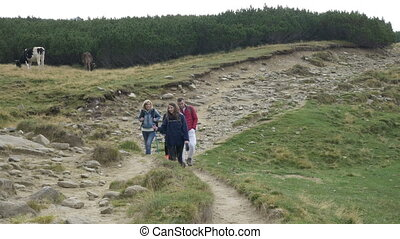 Group of teenage friends walking along hiking trail path enjoying the mountain trip and cows nature landscape