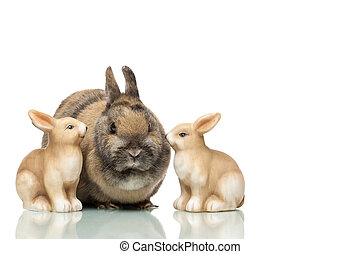 Group of three cute Easter bunnies sitting together