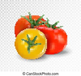Group of three realistic tomatoes isolated on a transparent background. Red and yellow tomato set. Vector 3d illustration.