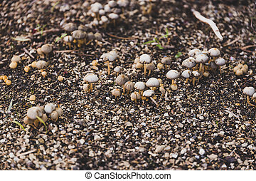 group of tiny mushrooms popping up from the ground among wet soil and gravel