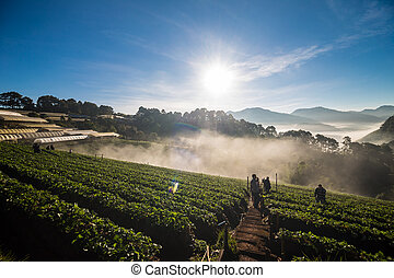 Group of tourist people enjoying sunrise on agriculture farm of strawberry field