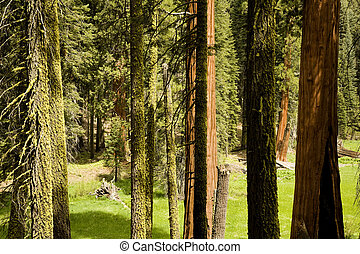 Group of Trees in a Forest