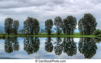 Group of Trees With Perfect Reflection in Water