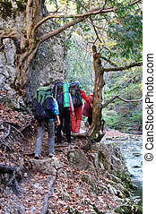 Group of trekkers hike  through the beautiful autumn woods