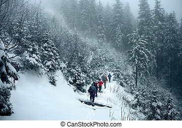 Group of trekkers on snow trail in winter forest