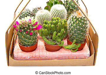 Group of various succulents in pots
