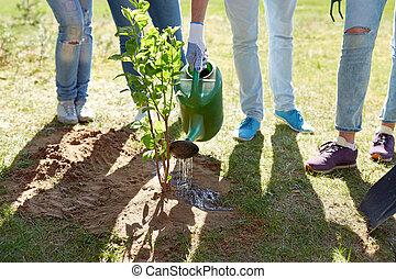 group of volunteers planting and watering tree -...