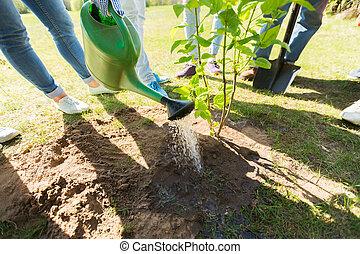 group of volunteers planting tree in park - volunteering,...