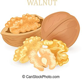 group of walnuts for your design