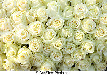 Group of white roses, wedding decorations - Big group of...