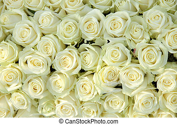 Group of white roses, wedding decorations