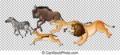 Group of wild African animals on transparent background