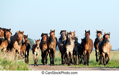 Group of wild horses in field