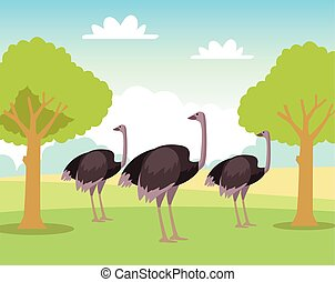group of wild ostriches animals in the field