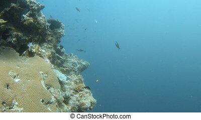 Group of yellow fish and black fish