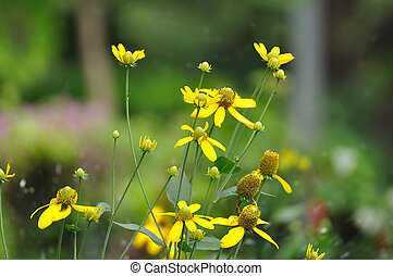 Group of yellow flowers in public garden