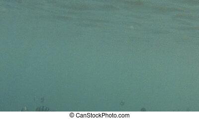 Group of zebra skin fish underwater