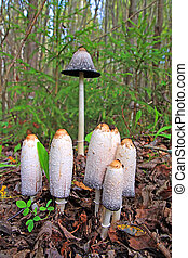 group toadstool on wood background