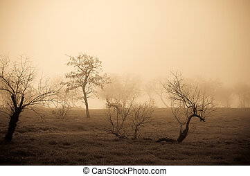 Group tree in fog