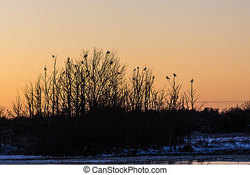 Group with crows in trees by sunset