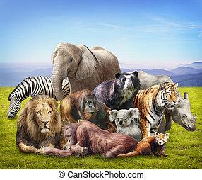 groupe animaux