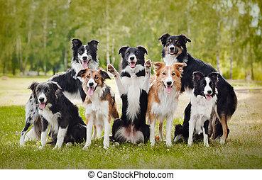 groupe, chiens, heureux