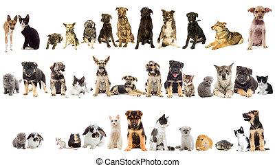 groupe, de, animaux familiers