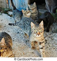 groupe, de, chats