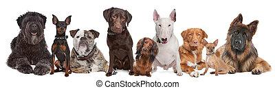 groupe, de, chiens