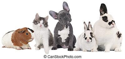 groupe, de, différent, animaux familiers