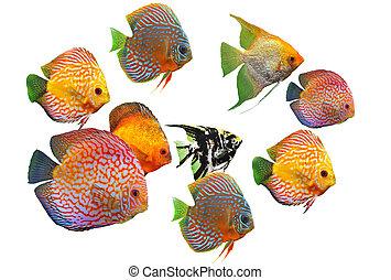 groupe, de, poissons