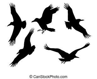 groupe, isolé, vecteur, fond, silhouette, blanc, corbeau