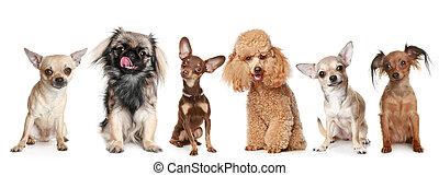 groupe, jeune, chiens