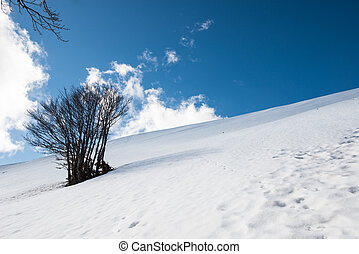 groupe, neige, arbres