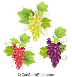 groupe, trois, raisins