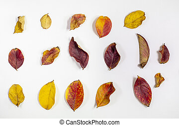 Grouping of dried Crepe Myrtle Leaves in Autumn