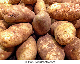 Grouping of Large Russet Potatoes