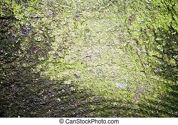 grov, grunge, bakgrund, strukturerad