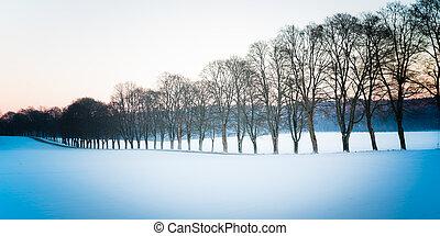 grove in winter