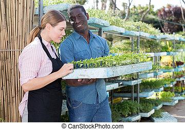 Growers checking seedlings