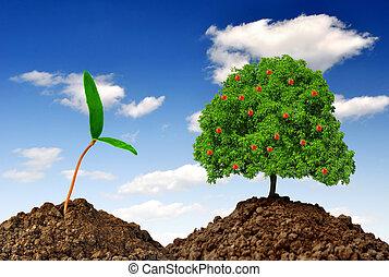 Growing apple tree on blue sky