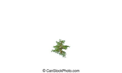 Growing Christmas tree with toys and gifts