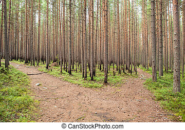 Growing forest after fire