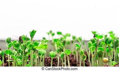 Growing Grass, Timelapse