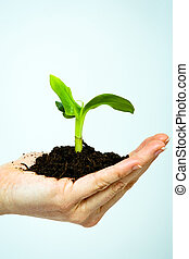 growing green plant in a hand isolated