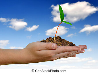 growing green plant in hand